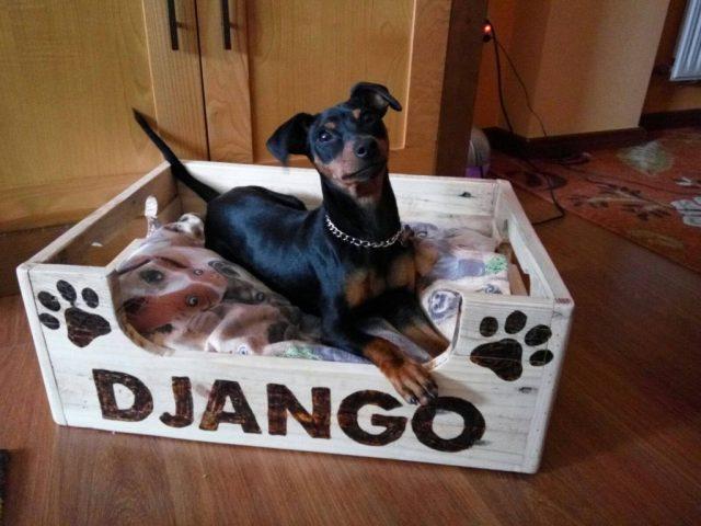 regalos de navidad para perros
