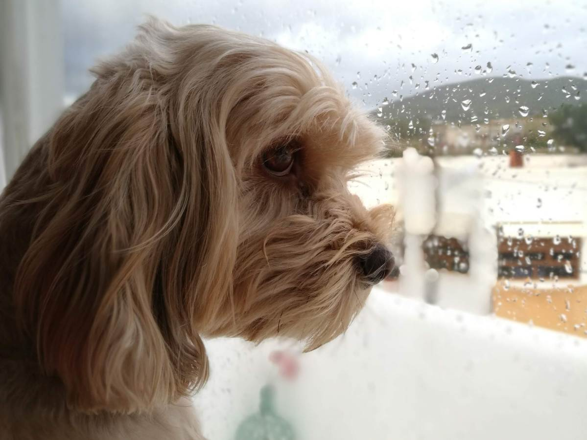 Por qué debes dejar a tu perro acceso a la ventana   El Blog de Uma