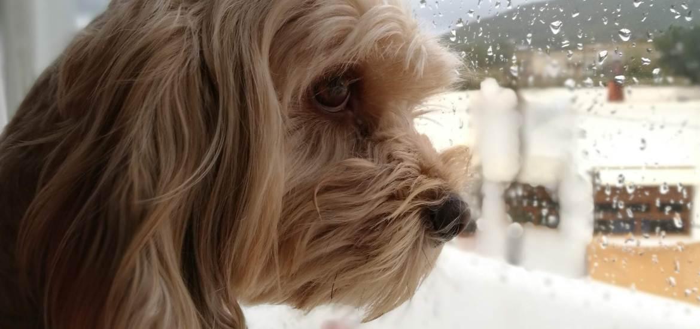 dejar al perro ver por la ventana