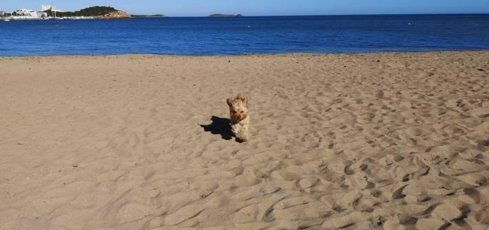 eventos para perros