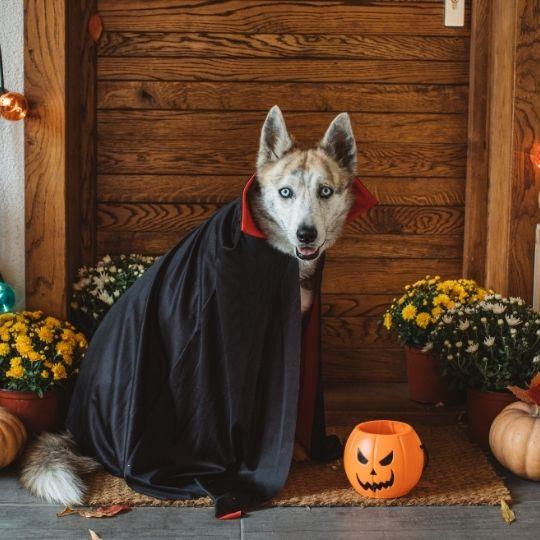 planes para Halloween con perro