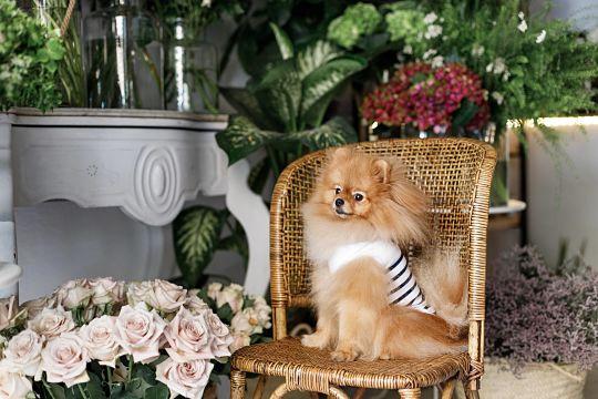 moda para perros
