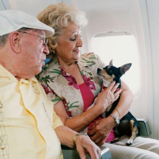 perros que viajan en avión