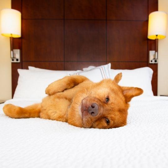 hoteles que admitan perros