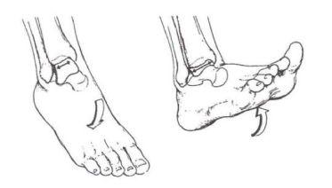 Movimiento de dorsiflexión del pie