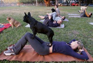 yoga con perros