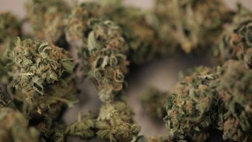ZDFzoom <br> Zoff ums Kiffen. Wie sinnvoll ist die Freigabe von Cannabis?