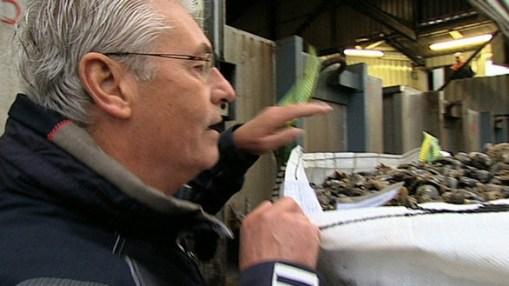 NDR Reportage <br> Das Muschel-Roulette