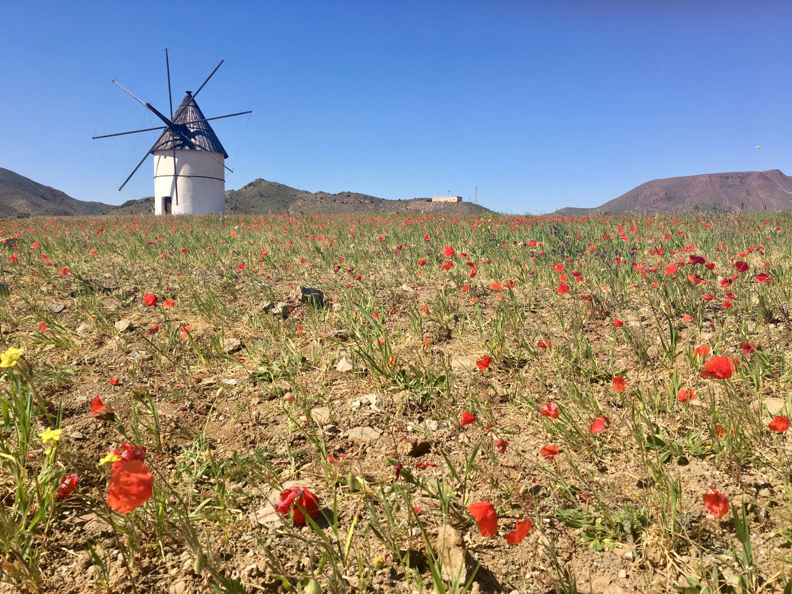 Molino con flores - San Jose