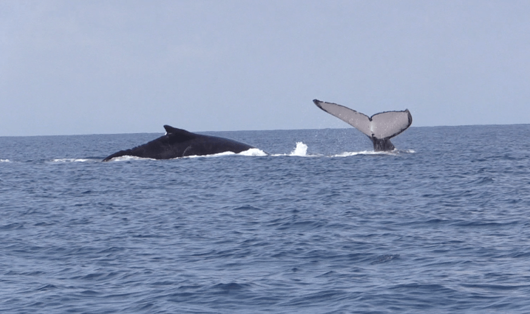 Temporada de Ballenas / Whale watching season
