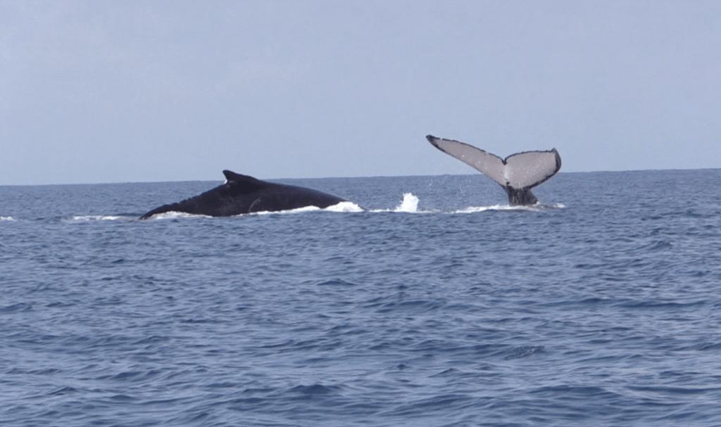 Temporada de Ballenas / Whale watching season
