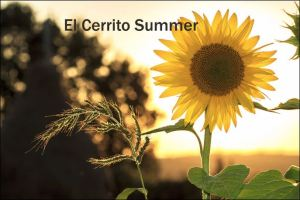 Picture of a Sun Flower to represent the Summer in El Cerrito