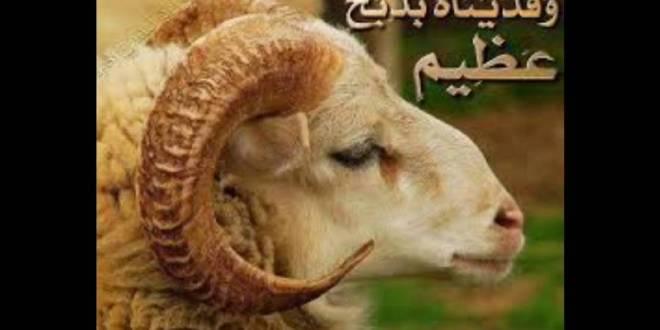 الأبعاد الاجتماعية في قصة فداء إسماعيل عليه السلام