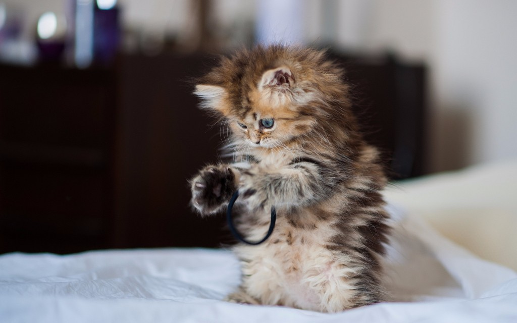Explicación científica de por qué nos gusta ver gatos en Internet