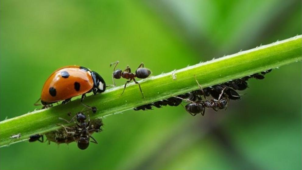 Apocalipsis ecológico: Científicos alertan de la extinción masiva de insectos