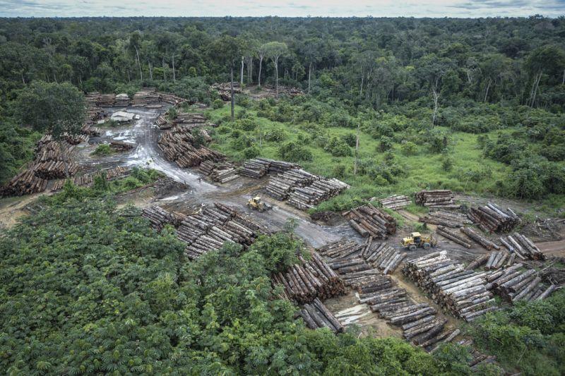 Madereros invaden tierra indígena Arara, en plena Amazonía brasileña