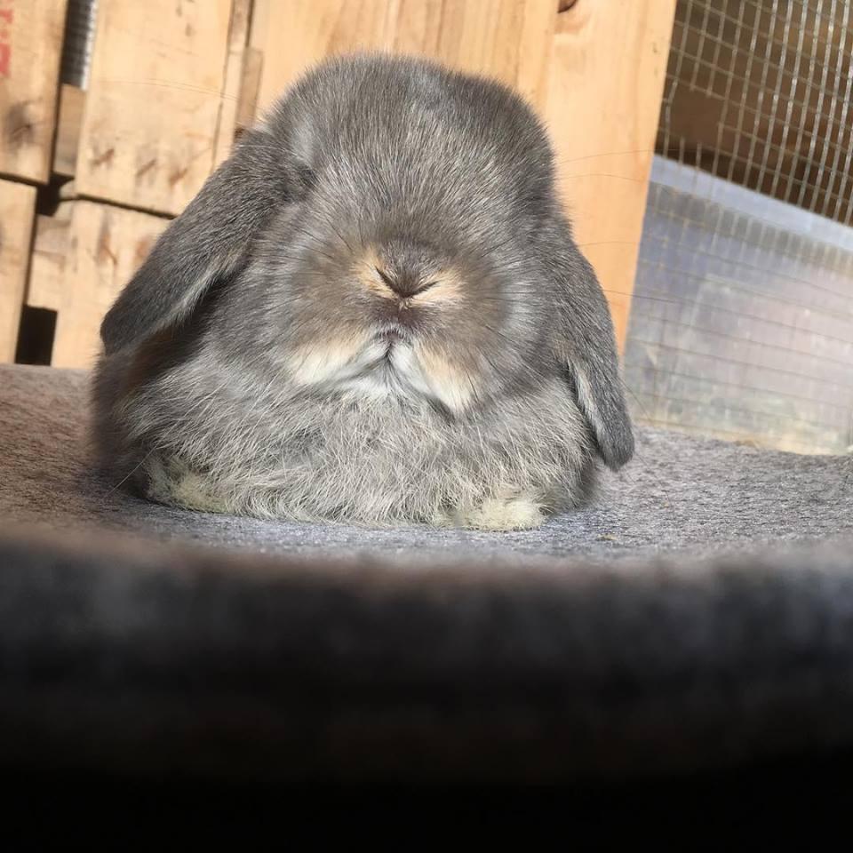 opal_rabbit