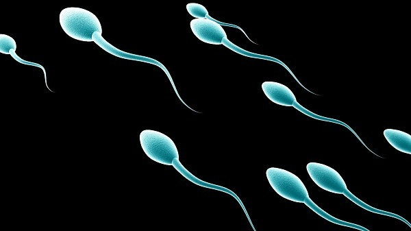 11 FACTS ABOUT THE MALE SPERM YOU PROBABLY DIDN'T KNOW