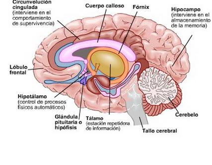 El Cuerpo Estimulación contra la hiperactividad  Tu revista de medicina estetica, vida saludable, cuidado del cabello, cuidado de la piel, cosmética y bienestar.