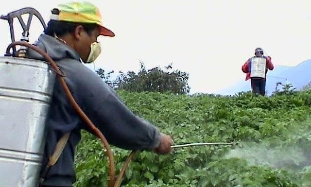 كيف تختار أفضل شركة مكافحة الحشرات بجدة