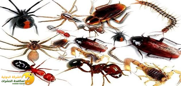 أفضل شركة مكافحة حشرات بجدة