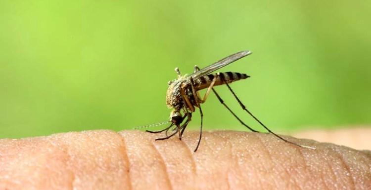 5 طرق طبيعية للتخلص من لدغة البعوض أو الناموس