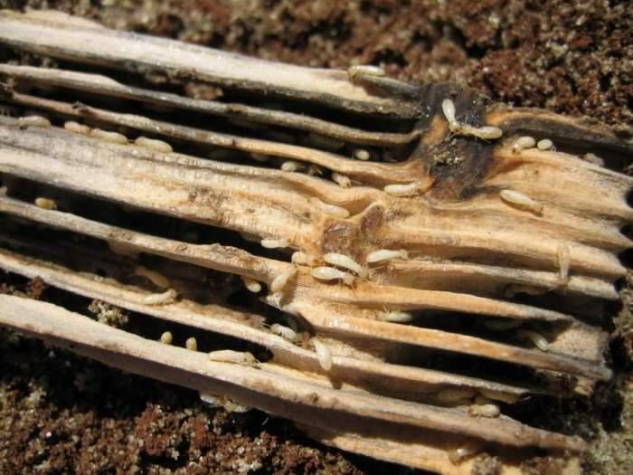 مكافحة النمل الأبيض بجدة