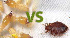 بق الفراش و حشرة النمل الابيض