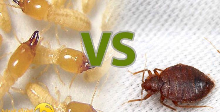 الفرق بين بق الفراش و النمل الابيض