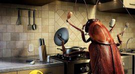 ارخص شركة مكافحة الصراصير برابغ