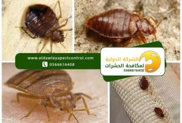 بق الفراش – كيفية القضاء على حشرة البق المنزلية