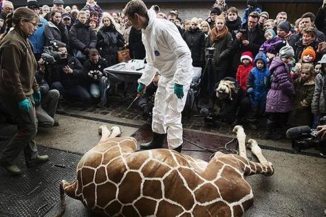 En 2014, el zoo de Copenhague mató a Marius, una jirafa macho de dos años. Tal acto de violencia extrema, habitual y conocido como culling, se llevó a cabo, además, en presencia de menores.