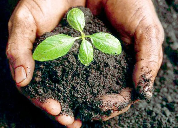 Con marchas, ferias educativas, regalo de plantines nativos y diversas actividades se recordó el Día Mundial del Medio Ambiente.