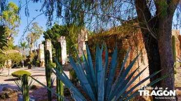 Diario-Tragon-Huachimontones-la-ruta-del-tequila-2018-55
