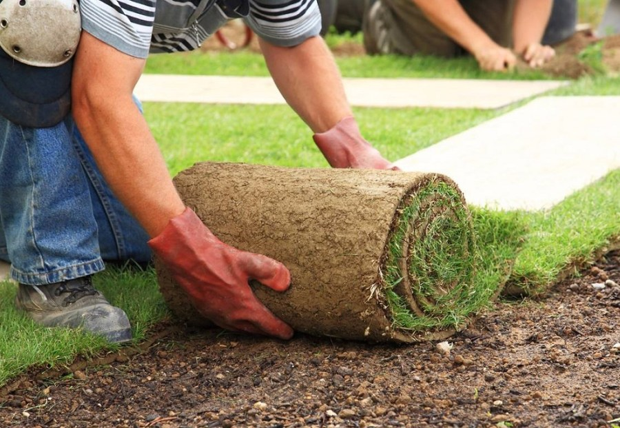 La jardiner a un negocio en auge en rep blica dominicana for Plan de negocios de un vivero de plantas