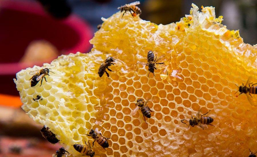 apicultura miel apicultores