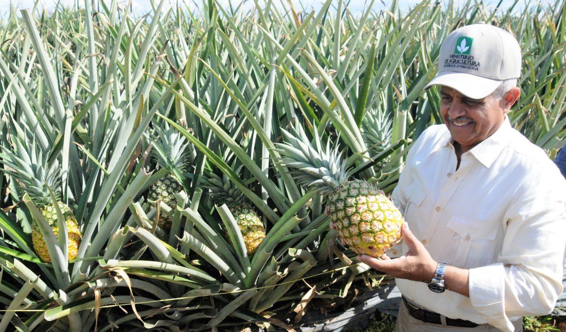piña orgánica ministro de agricultura