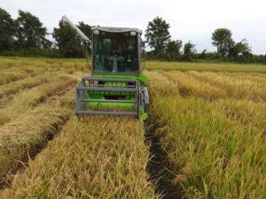 ولاية ميزوري الأمريكية تسعي لتحويل مصر بوابتها لتصدير الأرز للشرق الأوسط