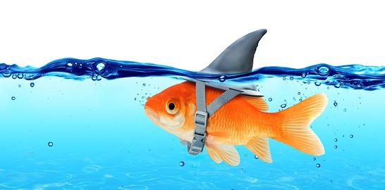 Fish Shark Gold Fin Everything Mindset