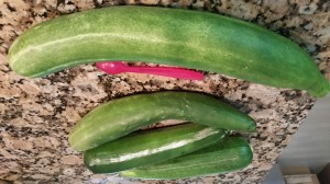 cukes and zucchini