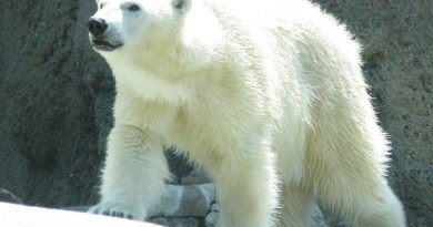 H5P Flashcards