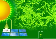 Renewable Energy, Green Power Electricity, Energy Conservation, Sustainable Energy, Environments, Solar power | Future Solar Panel would use tricks of LIGHT HARVESTING ALGAE
