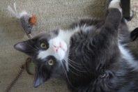 cat laying on carpet