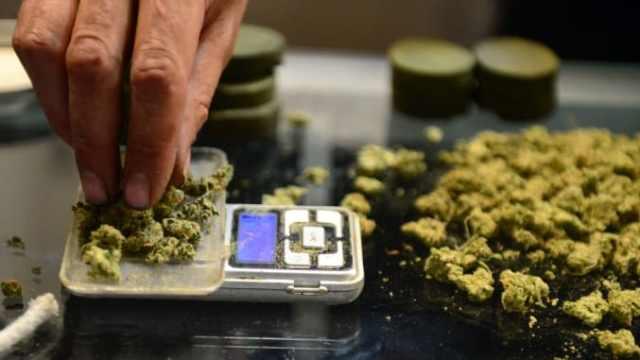 measuring cannabis
