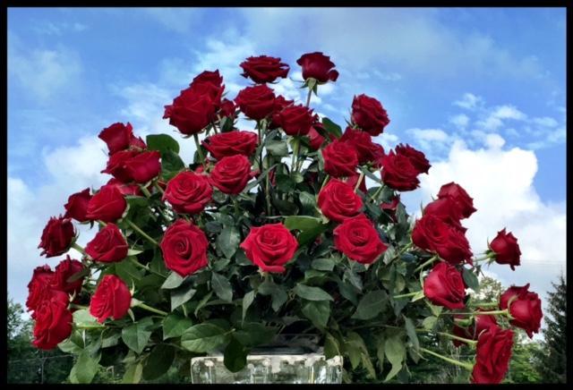 Roses For Vases