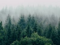 fog-forest