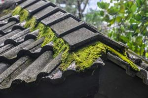 Roof moss on Pleasanton roof, cleaned by Element Roofing.