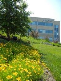 Office Park Landscape