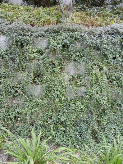 Engineered green wall