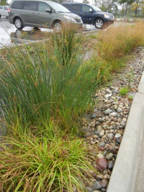Planted bioswales filter stormwater runoff.